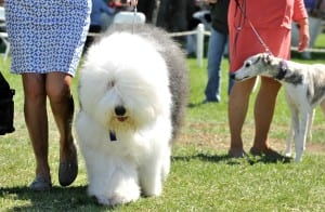Lompoc_Valley_Dog_Show