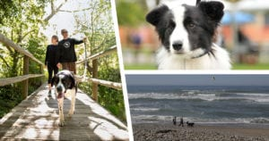 Lompoc Dog Friendly Activities